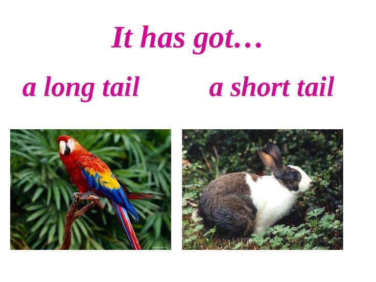 It has got… a long tail a short tail