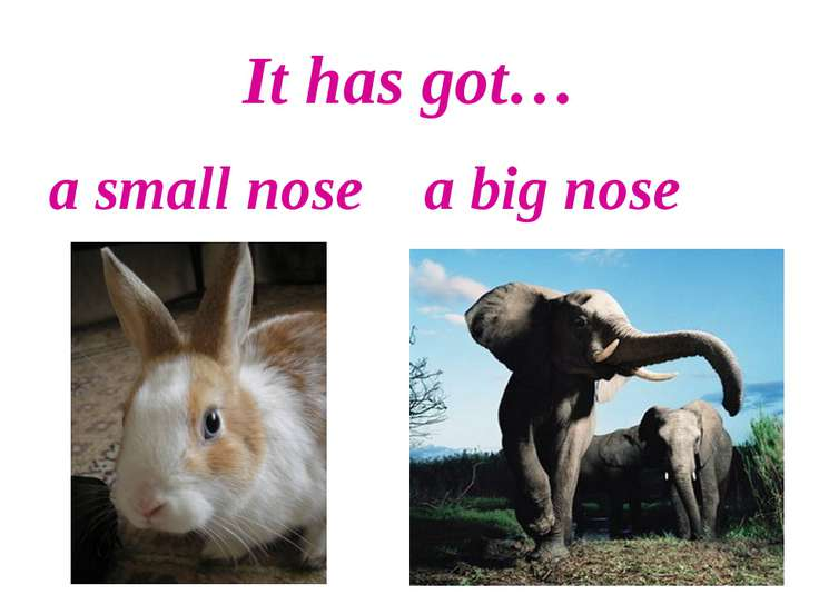 It has got… a small nose a big nose