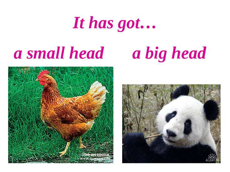 It has got… a small head a big head