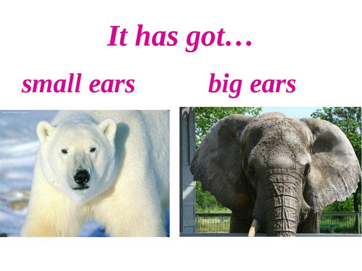 It has got… small ears big ears