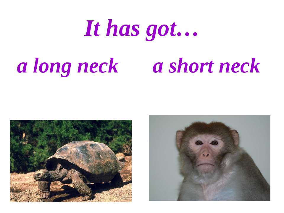 It has got… a long neck a short neck