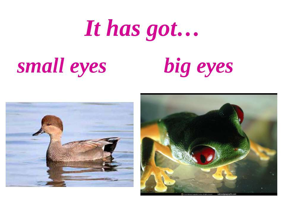 It has got… small eyes big eyes