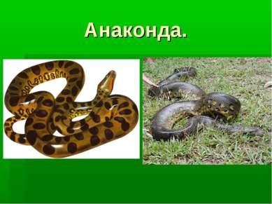 Анаконда.