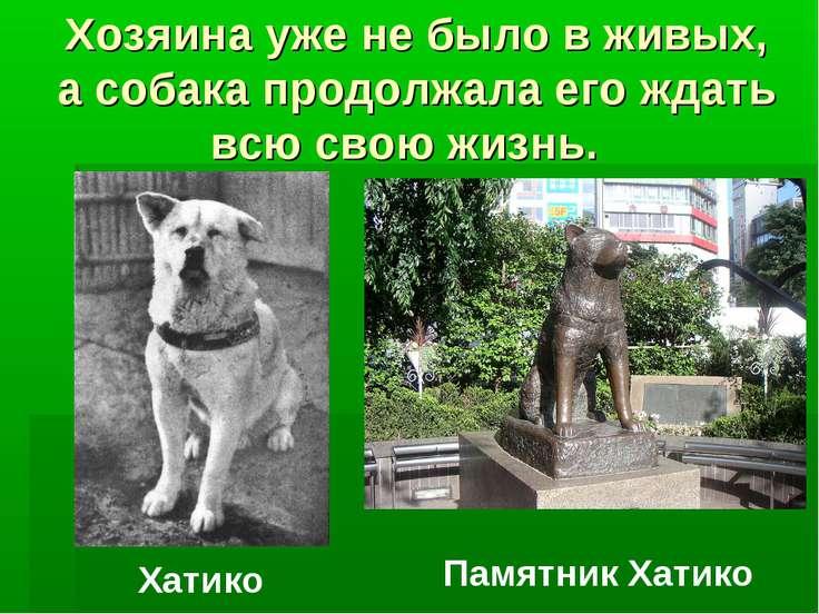 Хозяина уже не было в живых, а собака продолжала его ждать всю свою жизнь. Ха...