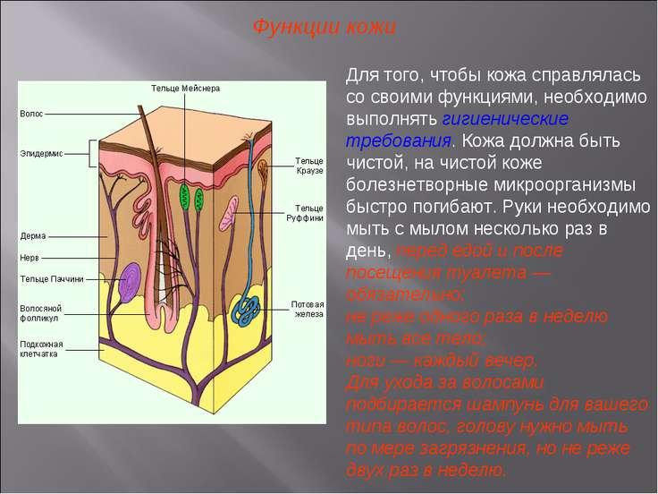 Функции кожи Для того, чтобы кожа справлялась со своими функциями, необходимо...