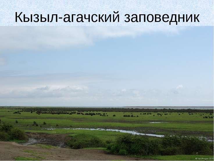 Кызыл-агачский заповедник