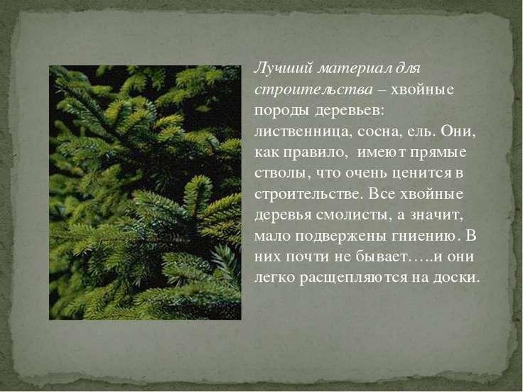 Лучший материал для строительства – хвойные породы деревьев: лиственница, сос...