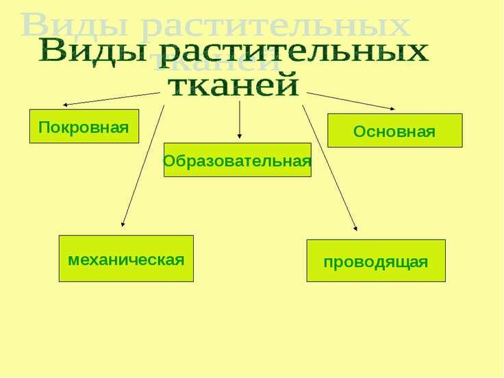 Покровная Образовательная Основная механическая проводящая