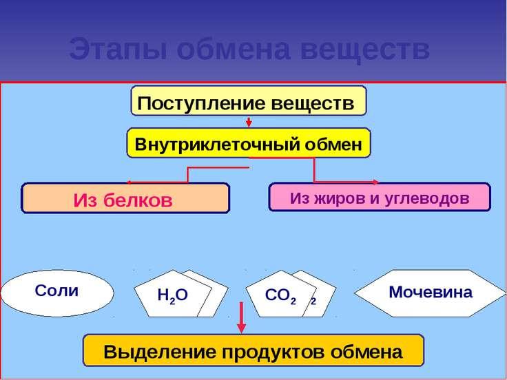 Этапы обмена веществ Н2О СО2 Мочевина Соли Поступление веществ Н2О СО2
