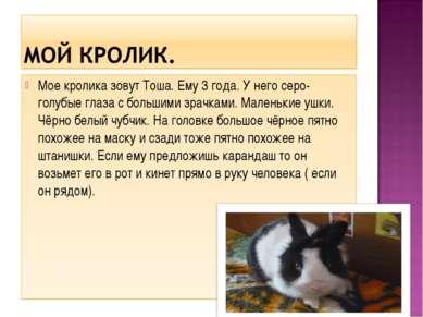 Мое кролика зовут Тоша. Ему 3 года. У него серо-голубые глаза с большими зрач...