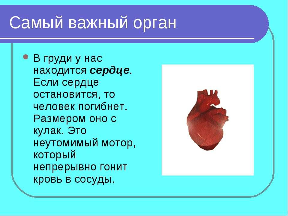 Самый важный орган В груди у нас находится сердце. Если сердце остановится, т...