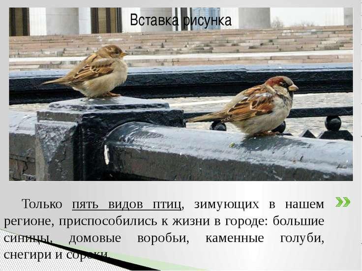 Только пять видов птиц, зимующих в нашем регионе, приспособились к жизни в го...