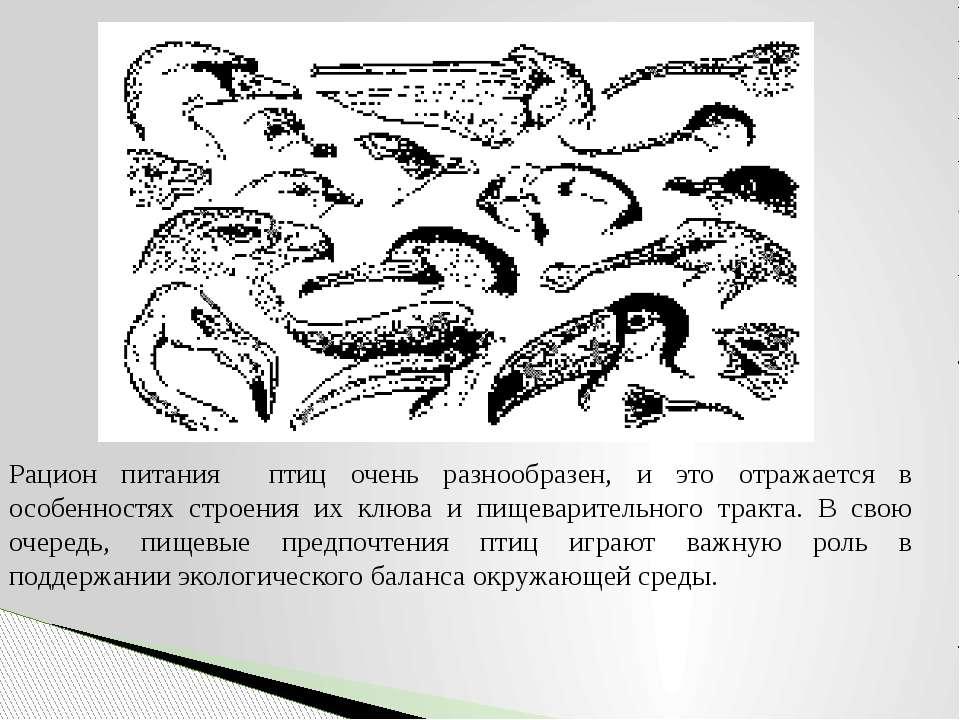 Рацион питания птиц очень разнообразен, и это отражается в особенностях строе...