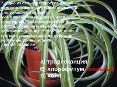 7. Одно из самых распространенных комнатных растений. Более двух веков оно ук...