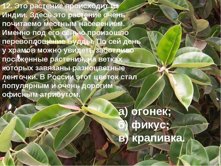 12. Это растение происходит из Индии. Здесь это растение очень почитаемо мест...