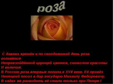 С давних времён и по сегодняшний день роза остаётся Непревзойдённой царицей ц...