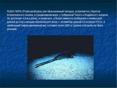 РЫБА-ПИЛА (Pristis pectinatus) или обыкновенный пилорыл, встречается у берего...