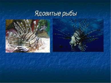 Ядовитые рыбы