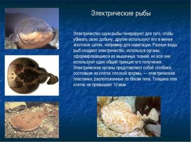 Электрические рыбы Электричество одни рыбы генерируют для того, чтобы убивать...