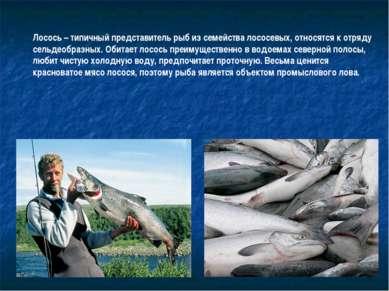 Лосось – типичный представитель рыб из семейства лососевых, относятся к отряд...