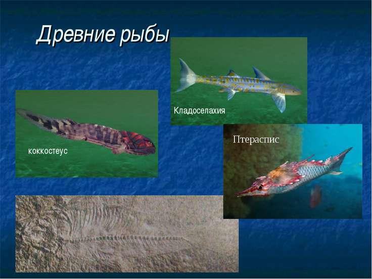 Древние рыбы Кладоселахия коккостеус Птераспис