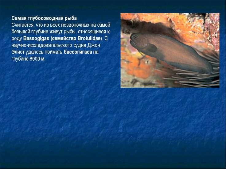 Самая глубоководная рыба Считается, что из всех позвоночных на самой большой ...