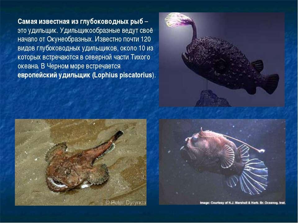 Самая известная из глубоководных рыб – это удильщик. Удильщикообразные ведут ...