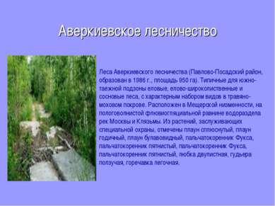 Аверкиевское лесничество Леса Аверкиевского лесничества (Павлово-Посадский ра...