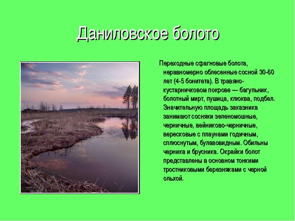 Даниловское болото Переходные сфагновые болота, неравномерно облесенные сосно...