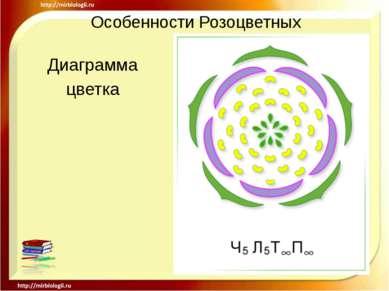 Особенности Розоцветных Диаграмма цветка