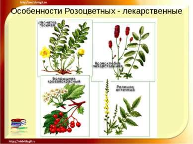 Особенности Розоцветных - лекарственные .