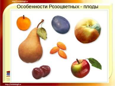 Особенности Розоцветных - плоды .