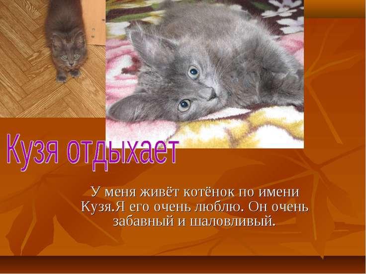 У меня живёт котёнок по имени Кузя.Я его очень люблю. Он очень забавный и шал...