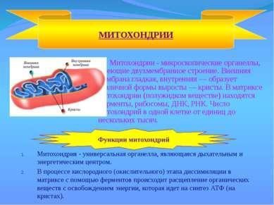 Митохондрии - микроскопические органеллы, имеющие двухмембранное строение. Вн...