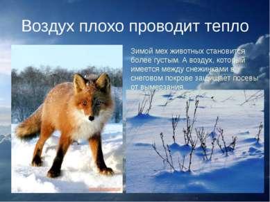 Воздух плохо проводит тепло Зимой мех животных становится более густым. А воз...
