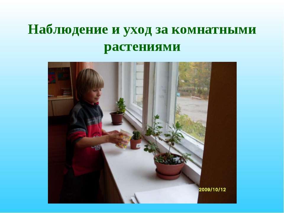Наблюдение и уход за комнатными растениями