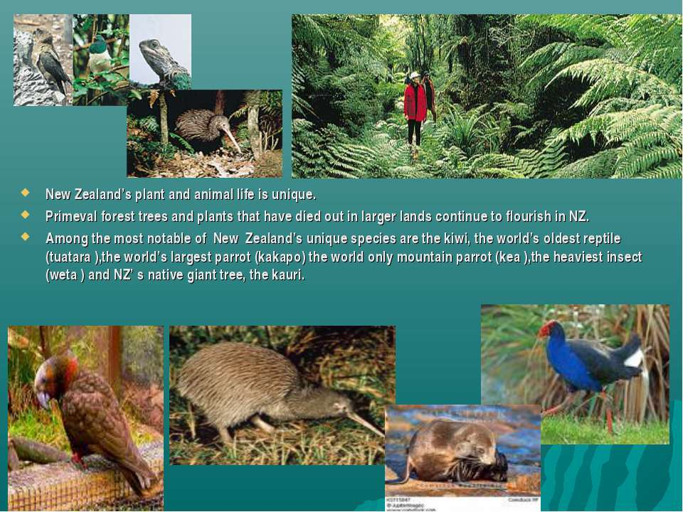 New Zealand's plant and animal life is unique. Primeval forest trees and plan...