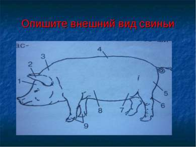 Опишите внешний вид свиньи