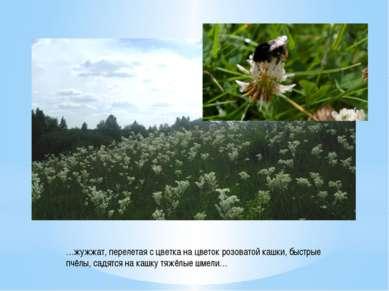 …жужжат, перелетая с цветка на цветок розоватой кашки, быстрые пчёлы, садятся...