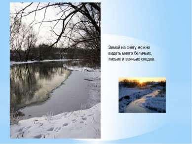 Зимой на снегу можно видеть много беличьих, лисьих и заячьих следов.