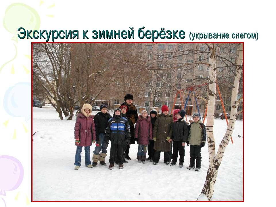 Экскурсия к зимней берёзке (укрывание снегом)