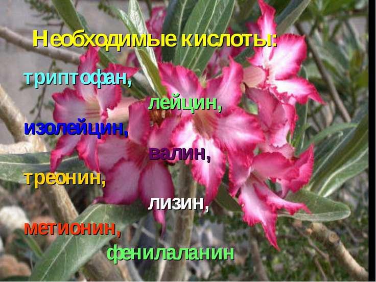 Необходимые кислоты: триптофан, лейцин, изолейцин, валин, треонин, лизин, мет...
