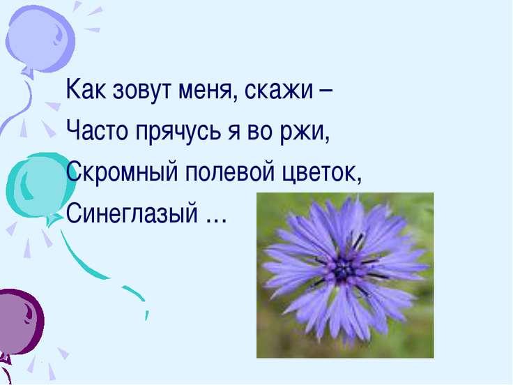 Как зовут меня, скажи – Часто прячусь я во ржи, Скромный полевой цветок, Сине...