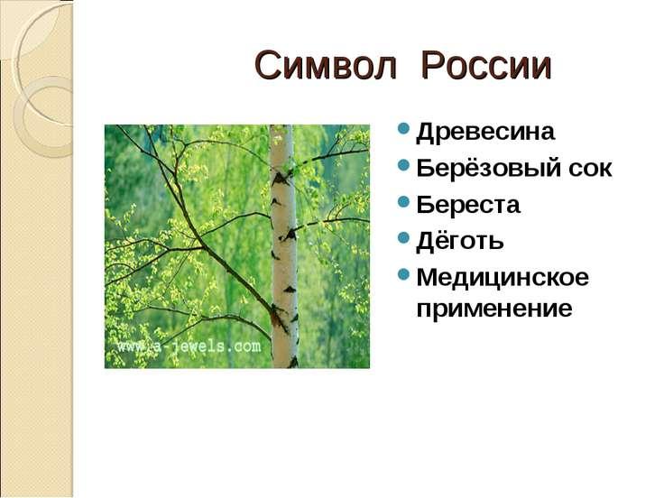 Символ России Древесина Берёзовый сок Береста Дёготь Медицинское применение