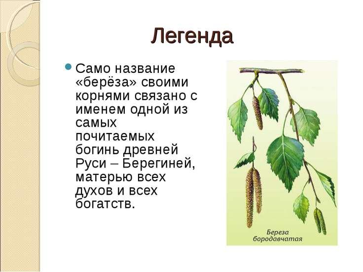 Легенда Само название «берёза» своими корнями связано с именем одной из самых...
