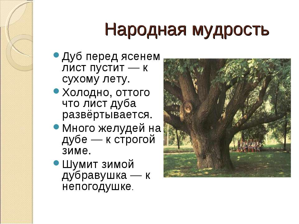 Народная мудрость Дуб перед ясенем лист пустит— к сухому лету. Холодно, отто...