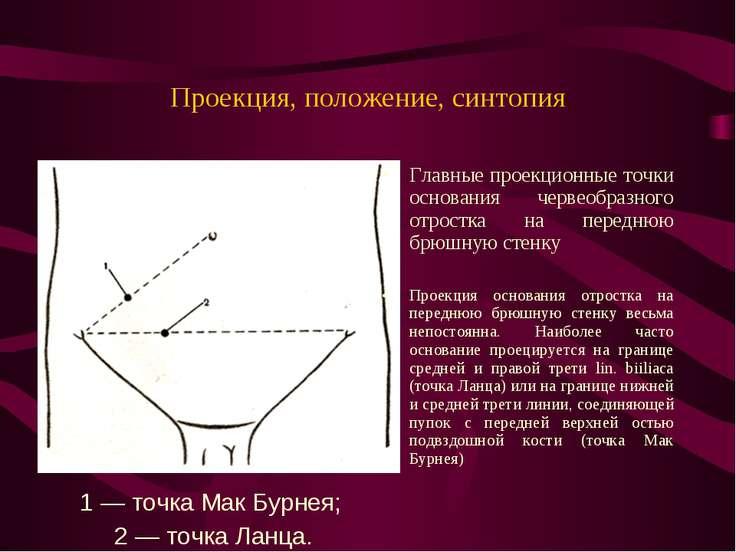 Проекция, положение, синтопия Главные проекционные точки основания червеобраз...