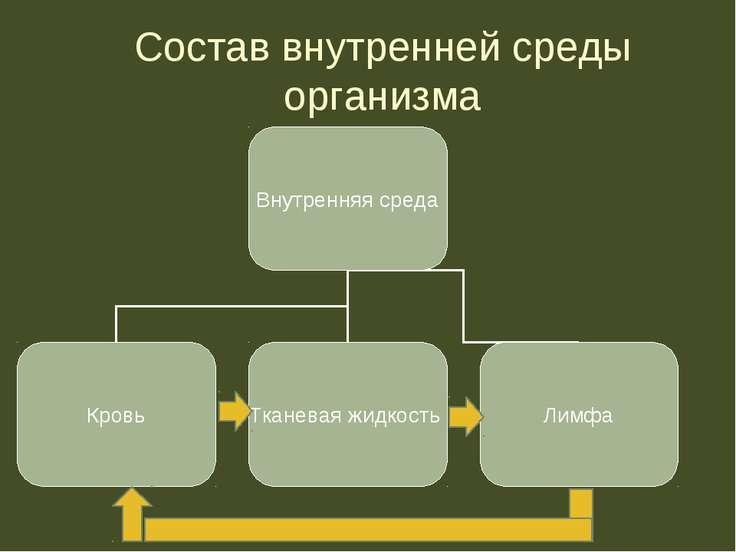 Состав внутренней среды организма