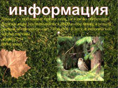 Птицы — подлинные друзья леса, их нужно оберегать. Во всём мире насчитывается...