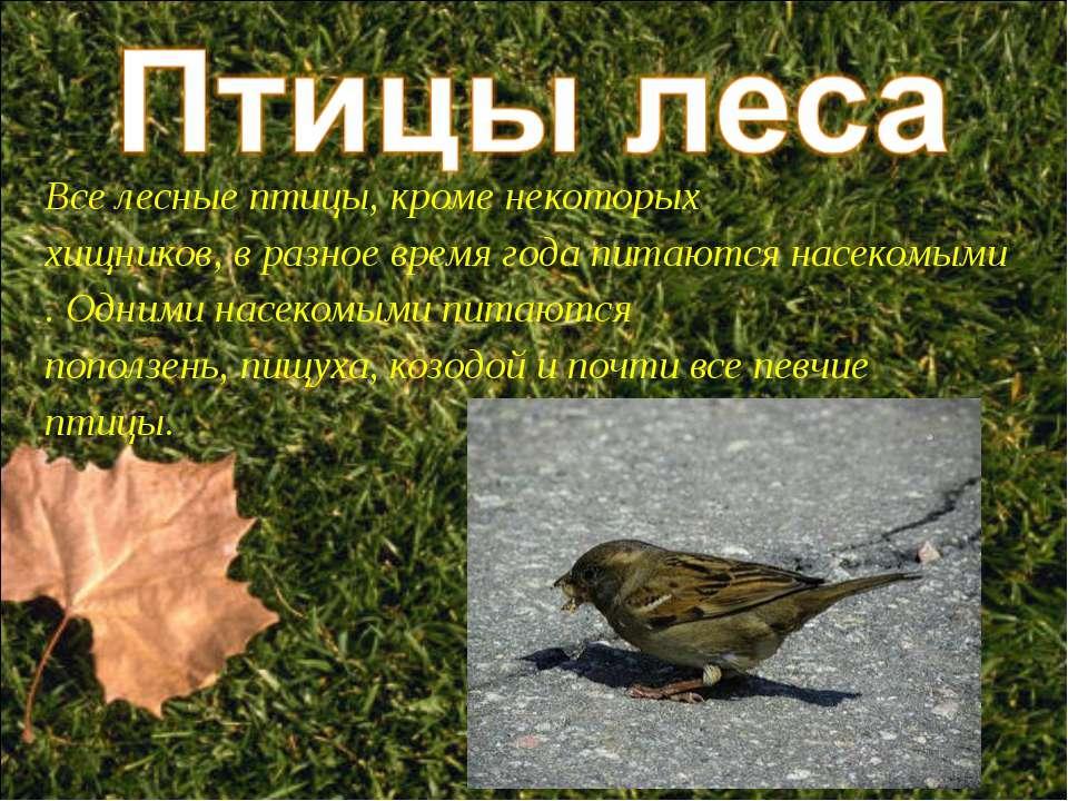 Все лесные птицы, кроме некоторых хищников, в разное время года питаются насе...